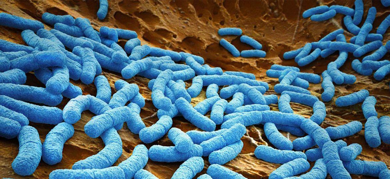 article_antibioticcas3