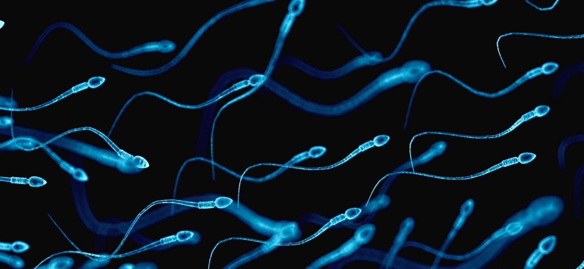 article_artificialsperm