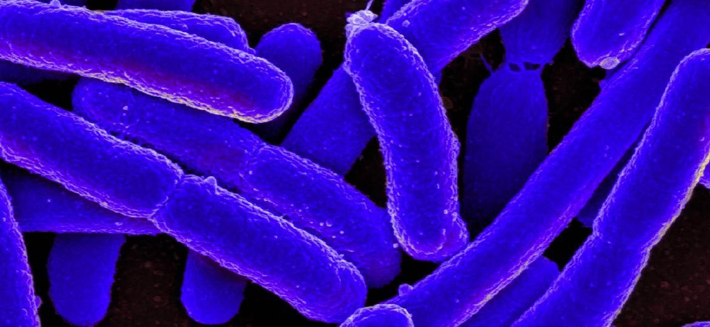 article_cyborgbacteria