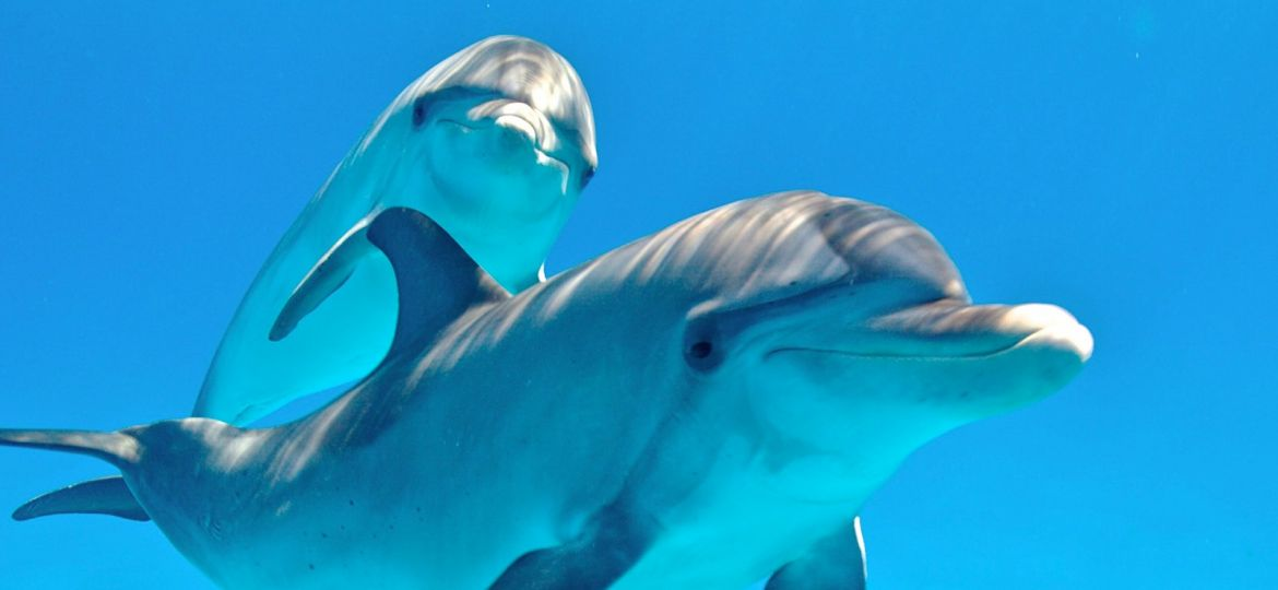 article_dolphin