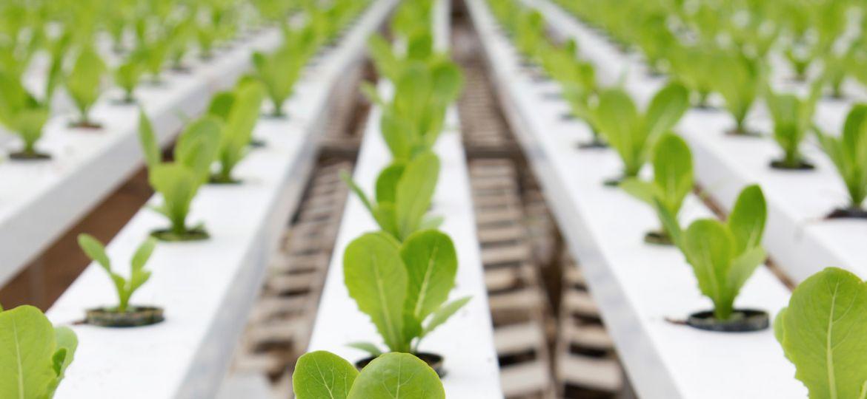 article_hydroponics