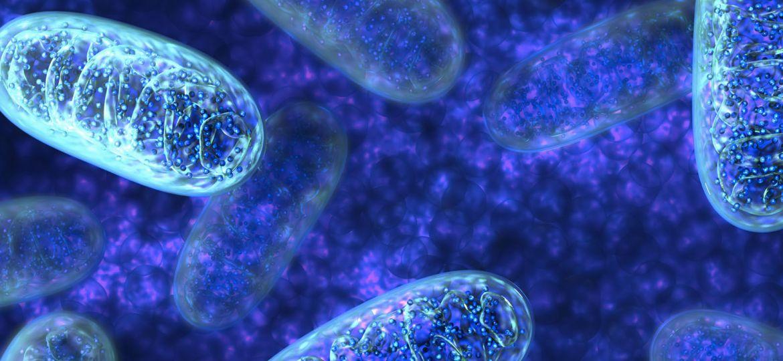 article_mitochondria