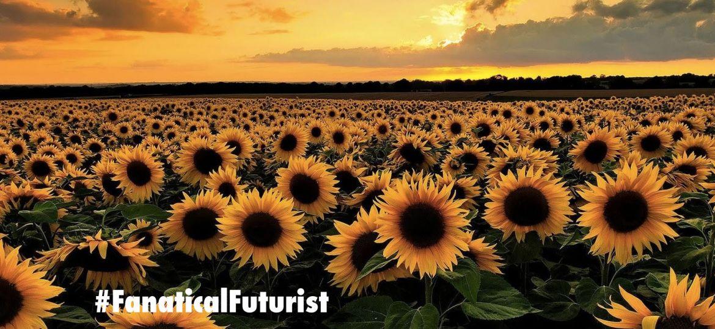 article_plants-sunflowers