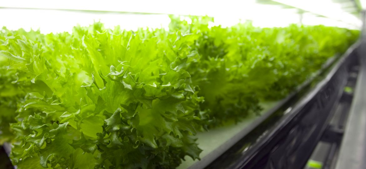 article_robolettuce