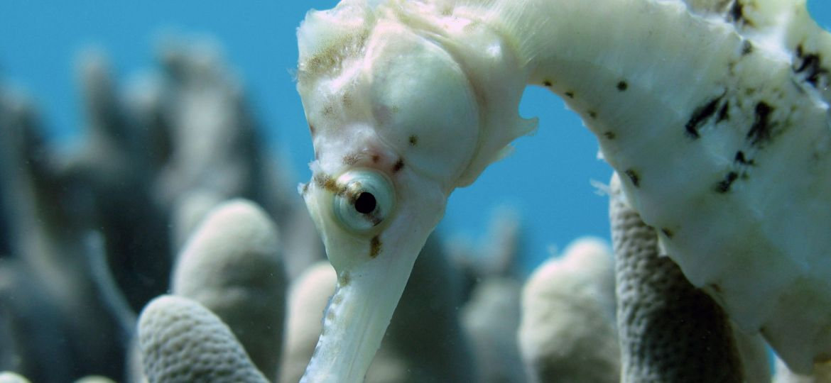 article_seahorse