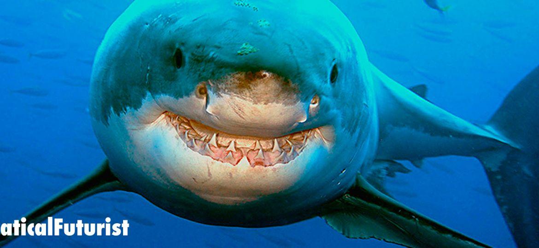 article_shark_spotter_australia