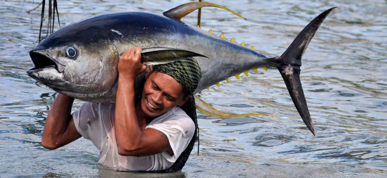 article_tuna