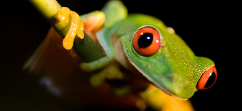 articleceofrog