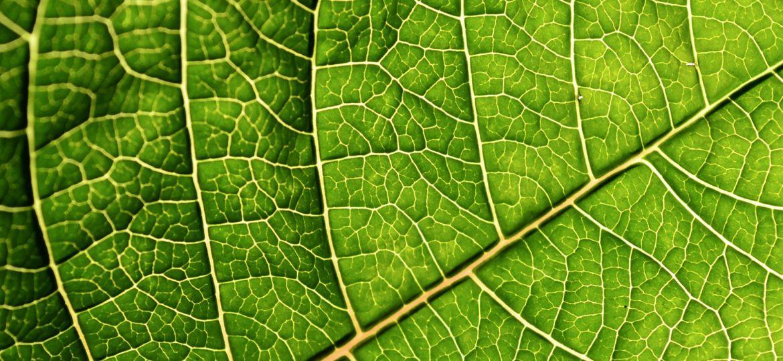 artificial_leaf