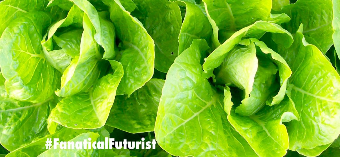 future_vertical_farm_vertical