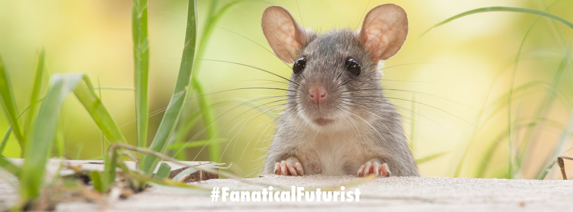 Animal Doctors – Library Mice