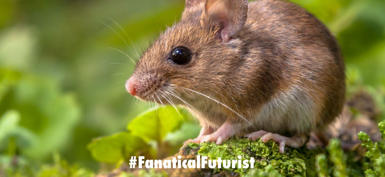 futurist_mouse_toe_regen