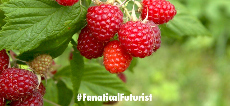 futurist_raspberry_robot