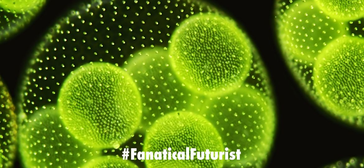 futurist_synthetic_cells