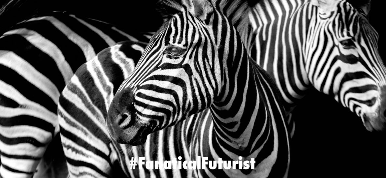 futurist_zebra_meat