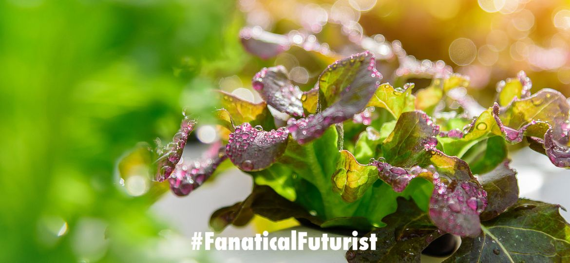 futurist_ocado_vertical_farms