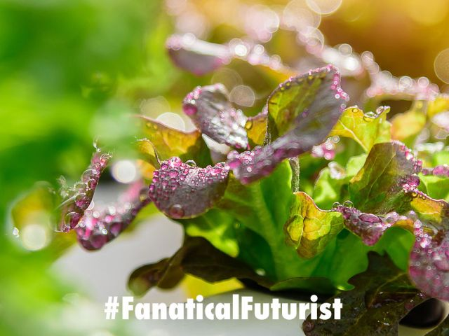 futurist_ocado_vertical_farms