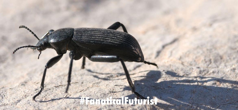 futurist_beetle_cam