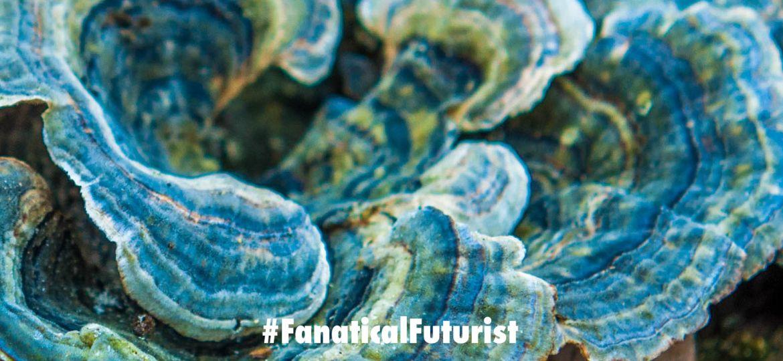 Futurist_fungal_computer